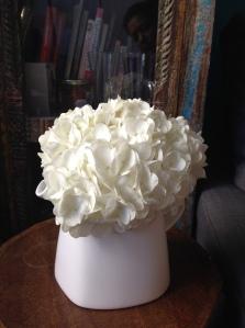 hydrangea in white teapot wider shot